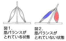筋バランス図